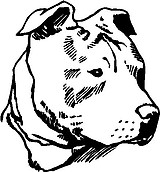 Pit Bull Head, Vinyl cut decal