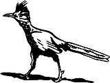 Road Runner, Vinyl Cut decal