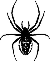 Black Widow, Spider, Vinyl cut decal