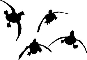 Flying Ducks, Coming in for a landing, Vinyl cut decal