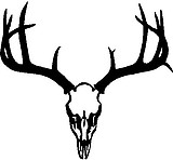 Deer Skull, Rack, Antlers, Vinyl cut decal
