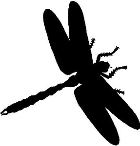 Dragon Fly, Vinyl decal Sticker