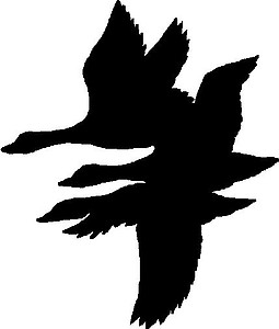 Flying Ducks, Vinyl cut decal