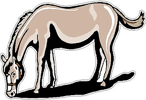 Horse, Full color decal