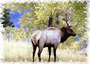 Elk RV Mural for the back of your RV by the Square Foot