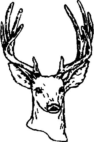 Buck, Deer, Vinyl cut decal