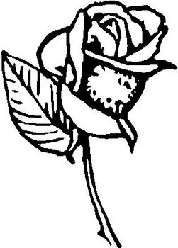 Flower, Rose,Vinyl cut decal